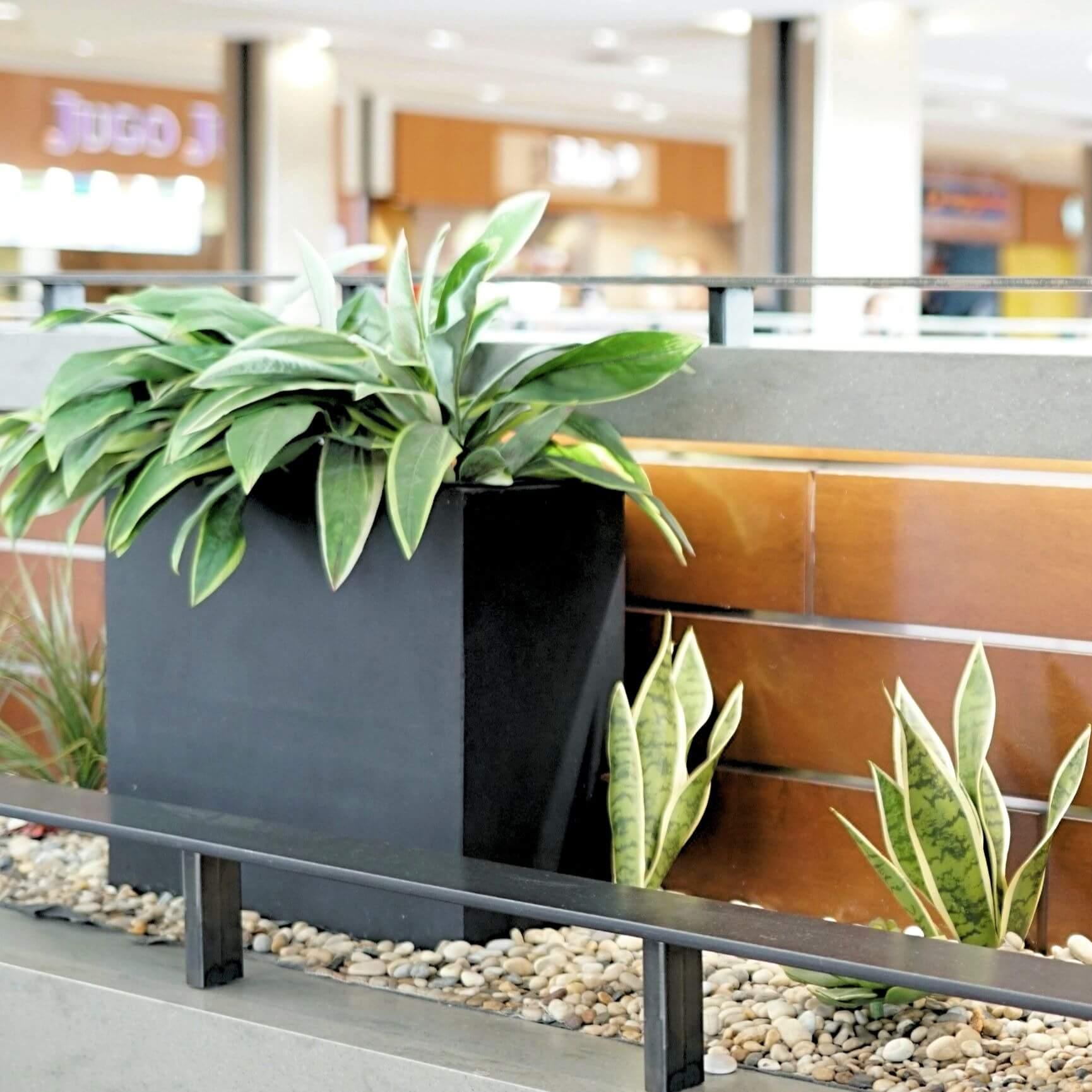 Planter box at Kingsway