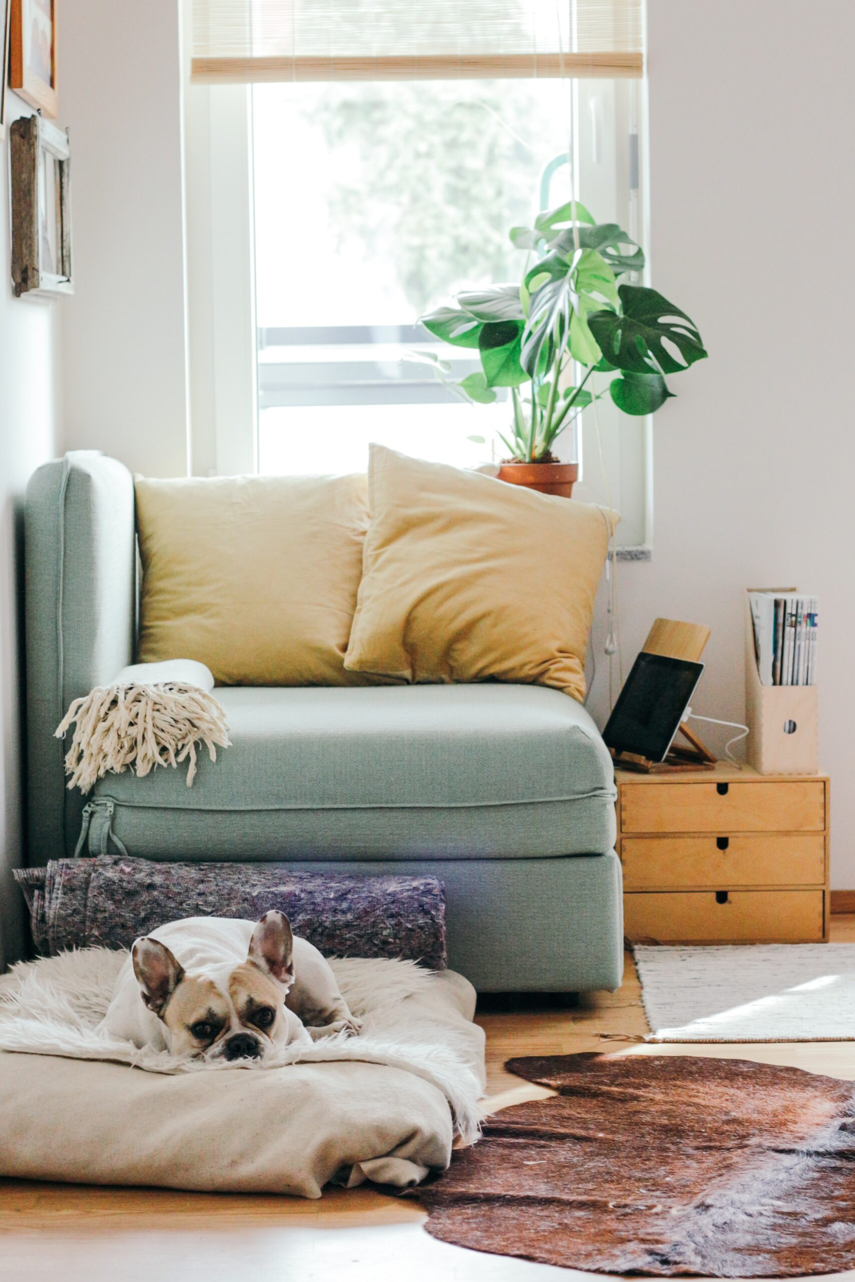 Small dog laying on pillow in family room with a cozy nook